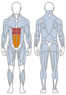 Picture of Abdominals